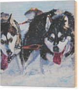 Alaskan Malamute Strong And Steady Wood Print