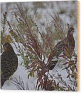 Alaskan Ptarmigan Wood Print