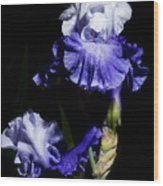Alaskan Seas Iris  Wood Print