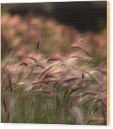 Alaskan  Summer Foxtail Wood Print