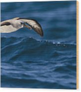 Albatross Of The Deep Blue Wood Print by Basie Van Zyl