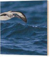 Albatross Of The Deep Blue Wood Print