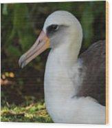 Albatross Portrait Wood Print