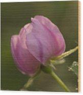 Alberta Rose Bud2 Wood Print