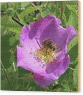Alberta Wild Rose And Bee Wood Print