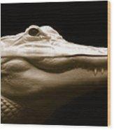 Albino Alligator Wood Print