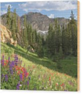 Albion Basin Wasatch Mountains Utah Wood Print by Utah Images
