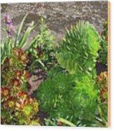Alcatraz Cactus Garden Wood Print