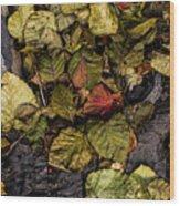 Alder Leaves Dan Creek 2015 Wood Print