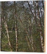 Alders At Camp 18 Wood Print