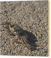 Ale Eke Ohiki Kuau Sand Crab Wood Print