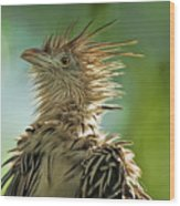 Alert Bird Wood Print
