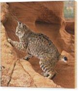 Alert Bobcat Wood Print by Larry Allan
