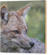 Alert Fox  Wood Print