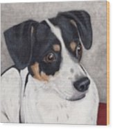 Alert Little Rat Terrier  Wood Print