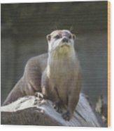 Alert Otter Amblonyx Cinerea Wood Print