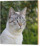 Alert Tabby With Blue Eyes Wood Print