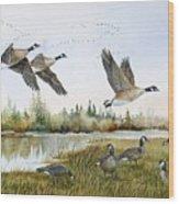Aleutian Geese At Lake Earl Wood Print