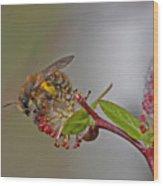 Alfalfa Bee Wood Print
