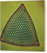 Algae, Diatom, Triceratium Ladus, Lm Wood Print by Eric Grave