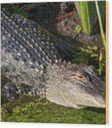 Algae Gator 2 Wood Print