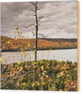 Algonquin Autumn Wood Print