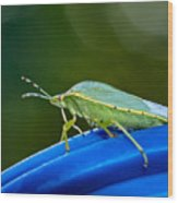 Alice The Stink Bug 2 Wood Print