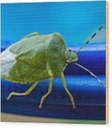 Alice The Stink Bug 3 Wood Print