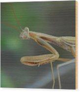Aliens Among Us Wood Print