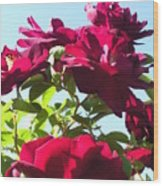 All About Roses And Blue Skies IIi Wood Print