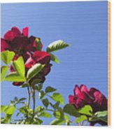 All About Roses And Blue Skies V Wood Print