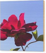 All About Roses And Blue Skies Viii Wood Print