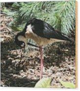 All Clear - Bird Looking Under Legs Wood Print