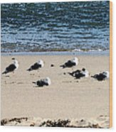 All My Gulls In A Row Wood Print