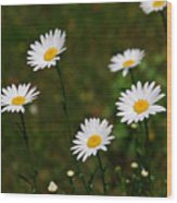 All The Daisies Wood Print