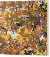 All The Leaves Are Red And Orange Fall Foliage With Sunshine Wood Print