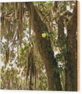 Allamanda And Oak Tree Wood Print