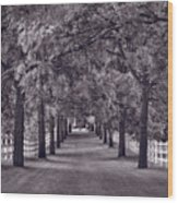Allee Way Bw Wood Print