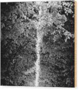 Allee_des_arbres Wood Print