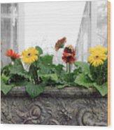 Allen Garden - Toronto Wood Print