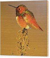 Allen's Hummingbird II Wood Print