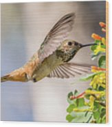 Allen's Hummingbird On Golden Currant Wood Print
