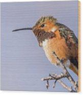 Allen's Hummingbird Perched Wood Print