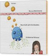 Allergic Response, Illustration Wood Print