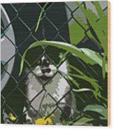 Alley Cat Wood Print