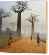 Alley Of The Baobab Wood Print