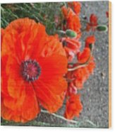 Alley Orange Red Poppies  Wood Print
