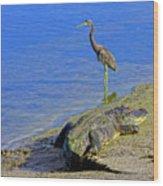 Alligator And Blue Heron Wood Print
