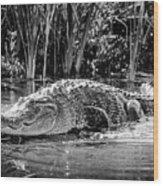 Alligator Bags Of Port Aransas Wood Print