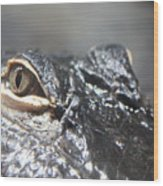 Alligator Eye Wood Print
